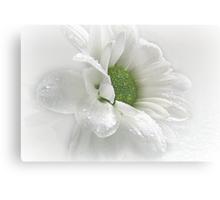 ~ White Beauty ~ Canvas Print