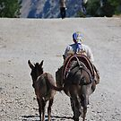 Old Lady, Donkey and her Ass by Christopher Cullen
