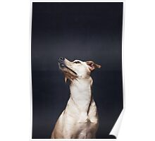 Portrait of a beautiful dog Poster