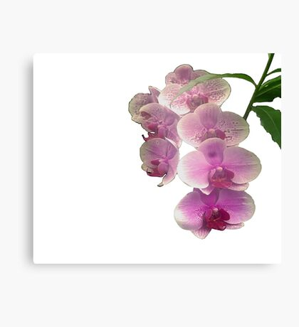 Pretty in pink orchids Canvas Print