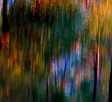 Shimmer by Michelle  Wrighton