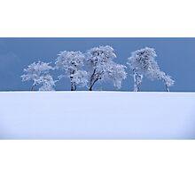 Northumberland tree's Photographic Print