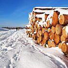 Snowy Schouwen by Adri  Padmos