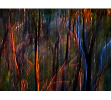 Ghost Trees at Sunset Photographic Print