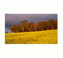 Canola under Stormy Skies Art Print