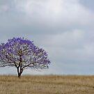 Just a Jacaranda - Near Boonah Qld Australia by Beth  Wode