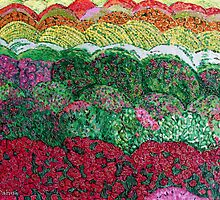 Colourful Fields of Cresantemot by Nira Dabush