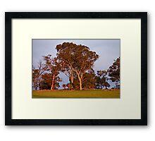 Gums and Grasstrees Framed Print