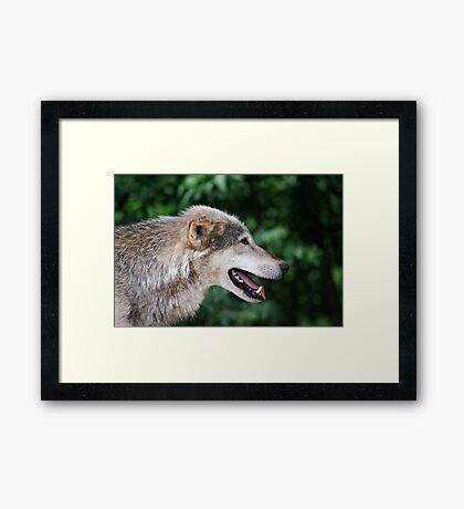 The lone hunter Framed Print
