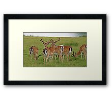 The young bucks Framed Print