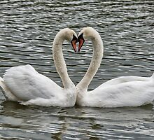 swan in love by kathleenjean