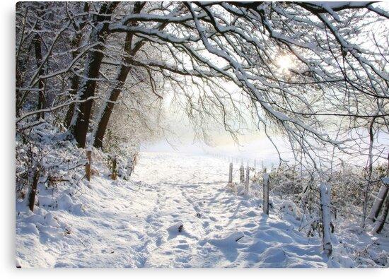 Winter path.... by Yool