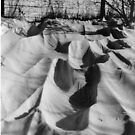 Wind sculptured Snowdrift.... by poohsmate
