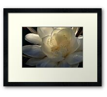 Queen of the Night at Daybreak Framed Print