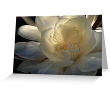Queen of the Night at Daybreak Greeting Card