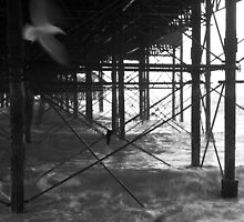 Flight under the pier by jimbanks
