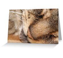 wildcat! Greeting Card