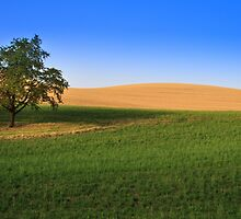Countryside by franceslewis