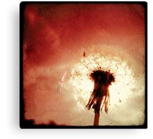 The Red Dandelion Canvas Print