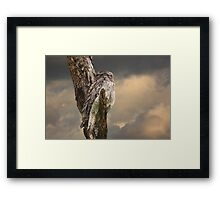 Silently Watchful Nightjar Framed Print