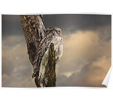 Silently Watchful Nightjar Poster