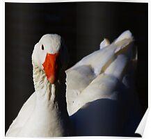 Goosey Gander Poster