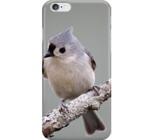 Tufted titmouse perched on a branch iPhone Case/Skin