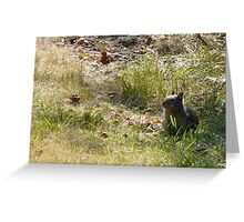 Young ground squirrel Greeting Card