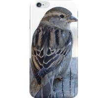 House sparrow sits on a weathered step iPhone Case/Skin
