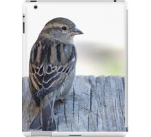 House sparrow sits on a weathered step iPad Case/Skin