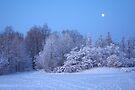 Winter Moon by Jo Nijenhuis