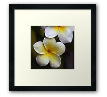 happy holidays and all the very best for 2011!!!! Framed Print