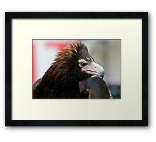 Wedge-Tailed Eagle,  Framed Print