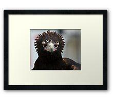 Wedge-Tailed Eagle Framed Print