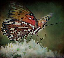 Butterfly Pretty by DottieDees