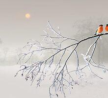 Whiteout by Igor Zenin