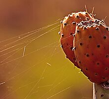 Prickly Pear by Rob Hawkins