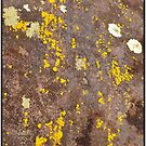 Splattered by dazaria