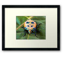Harlequin/Hibiscus Bug Framed Print