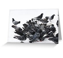 Pigeons in snow Greeting Card