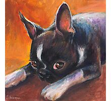Whimsical Boston Terrier dog painting Photographic Print