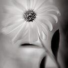 Daisy by kimmac