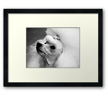 Perfectly Groomed Poodle  Framed Print
