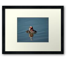 Little Cry Baby Grebe Framed Print