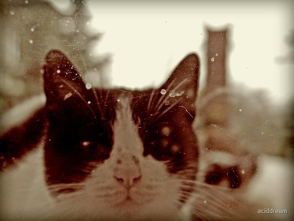 Top Cats - part 3 by aciddream