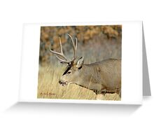 Fall Stag  Greeting Card