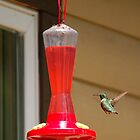 Hummingbird at Star Lake by jwphoto1214