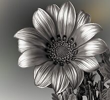 Peruvian Daisy in BW by Snopaw