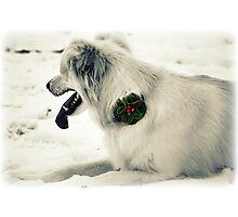 Broach for Christmas Photographic Print