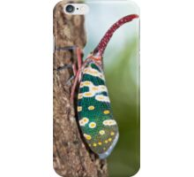 big nosed beauty iPhone Case/Skin